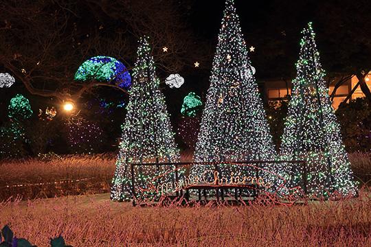 クリスマスツリーのイルミ
